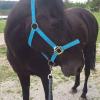Des cavaliers de Haute-Saône